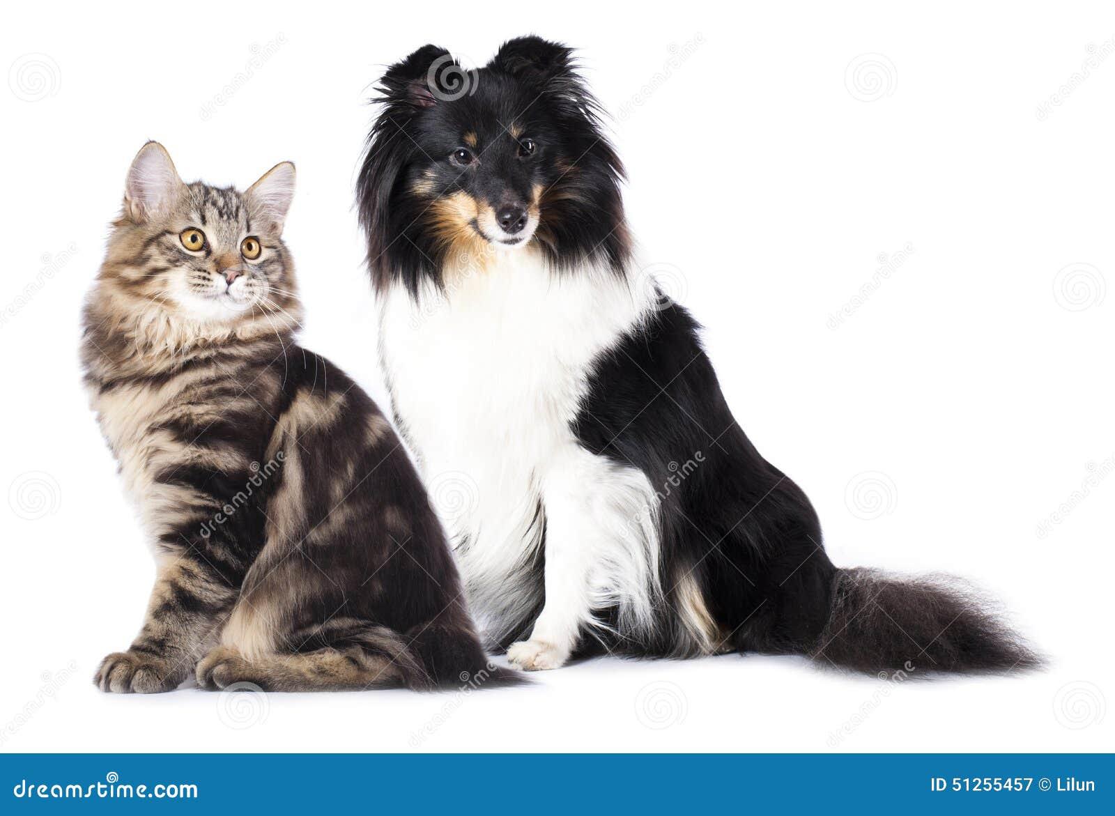 孕和狗干电影_猫和狗在白色背景的特写镜头画象.