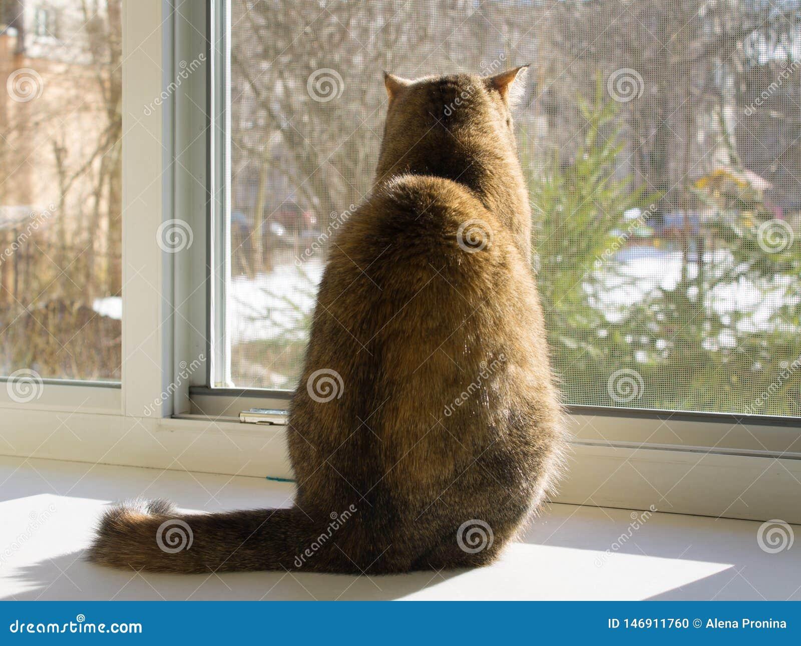 猫坐窗台并且通过蚊帐看开窗口