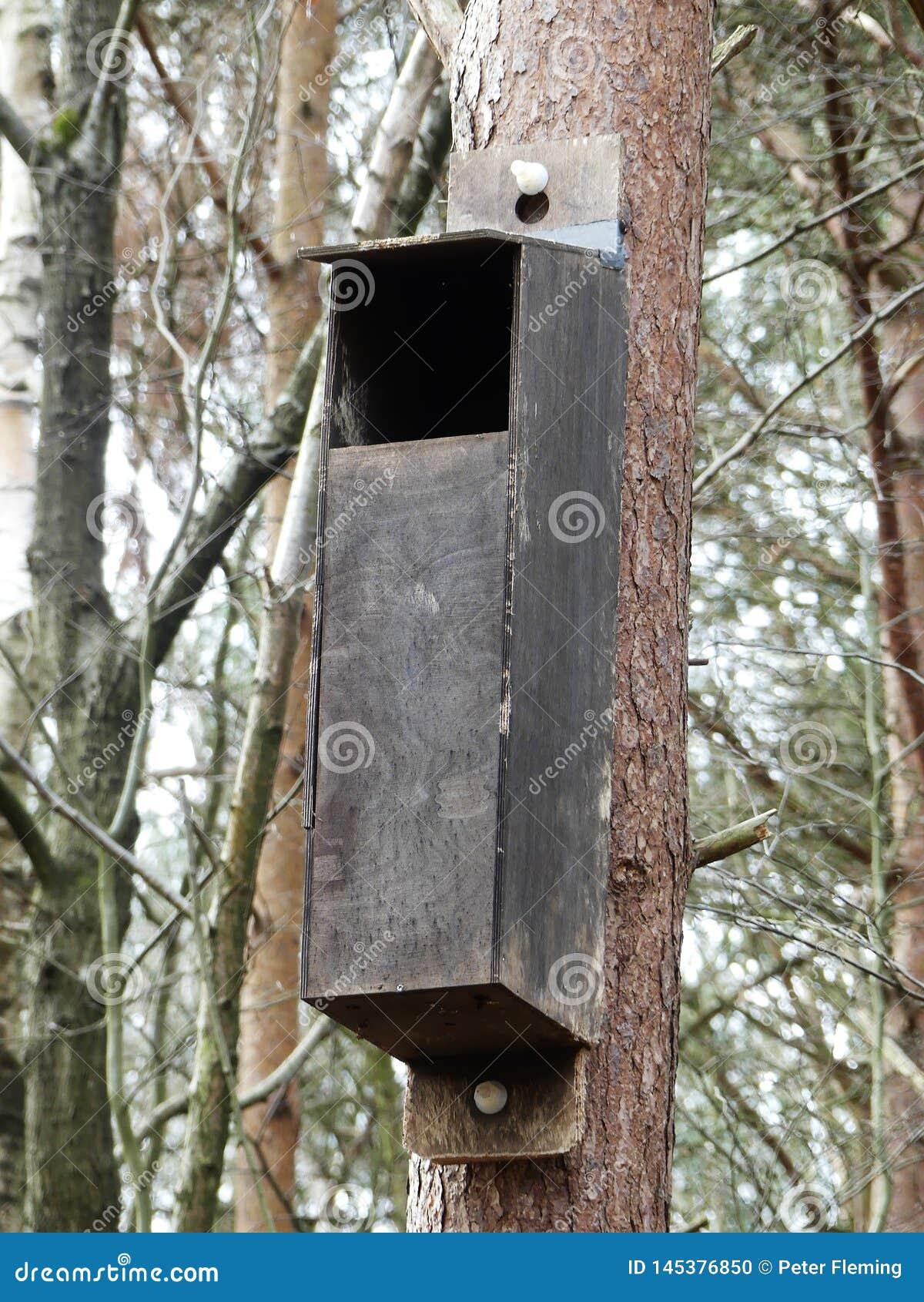 猫头鹰的嵌套箱在森林地