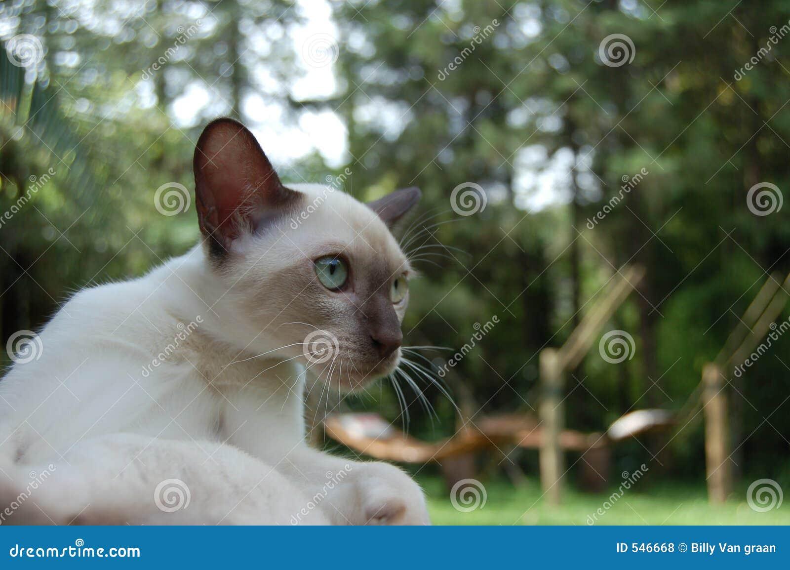 Download 猫接近 库存照片. 图片 包括有 眼睛, 蓝色, 特写镜头, 交配动物者, 空白, 小猫, 耳朵 - 546668