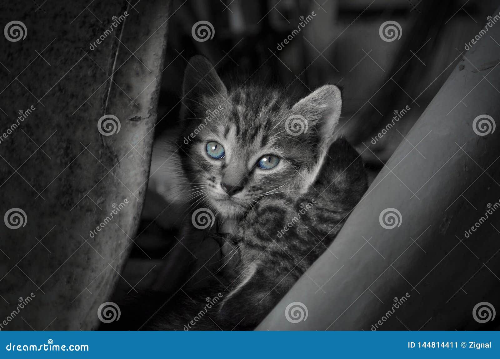 猫是储藏室的基于