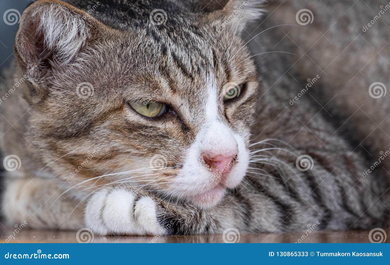 猫是逗人喜爱的宠物并且喜欢是接近所有者 但是猫的深刻的习性是坏的