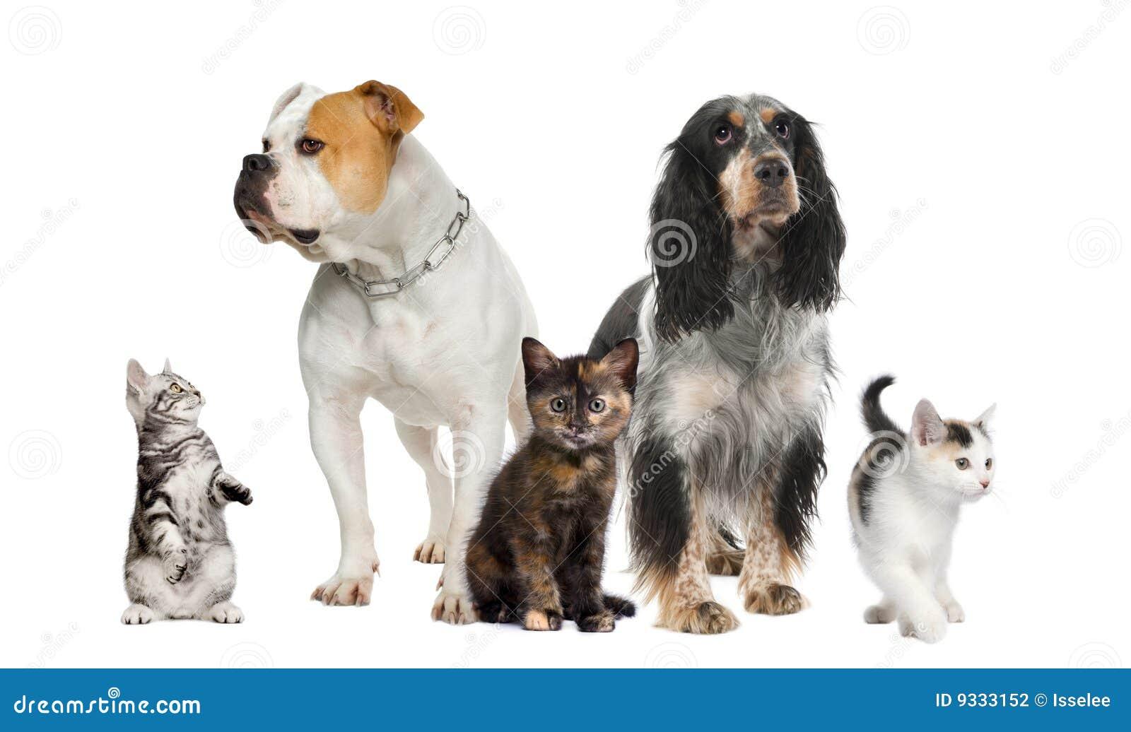 背景猫狗最前队宠爱白色.