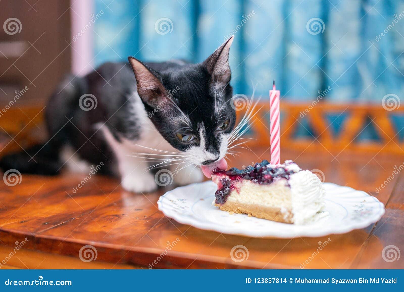 猫舔她的第一生日蛋糕
