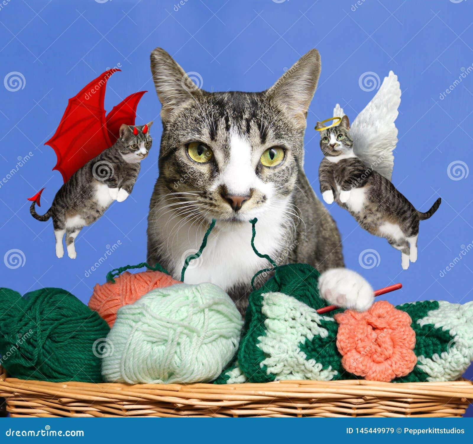 猫良心-好天使全部赌注或坏恶魔猫-将哪些她选择?