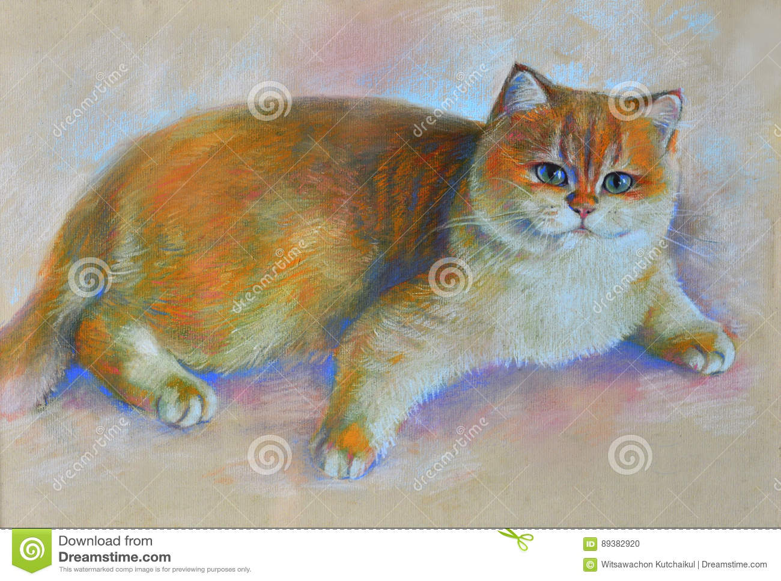 绘画猫英国shorthair