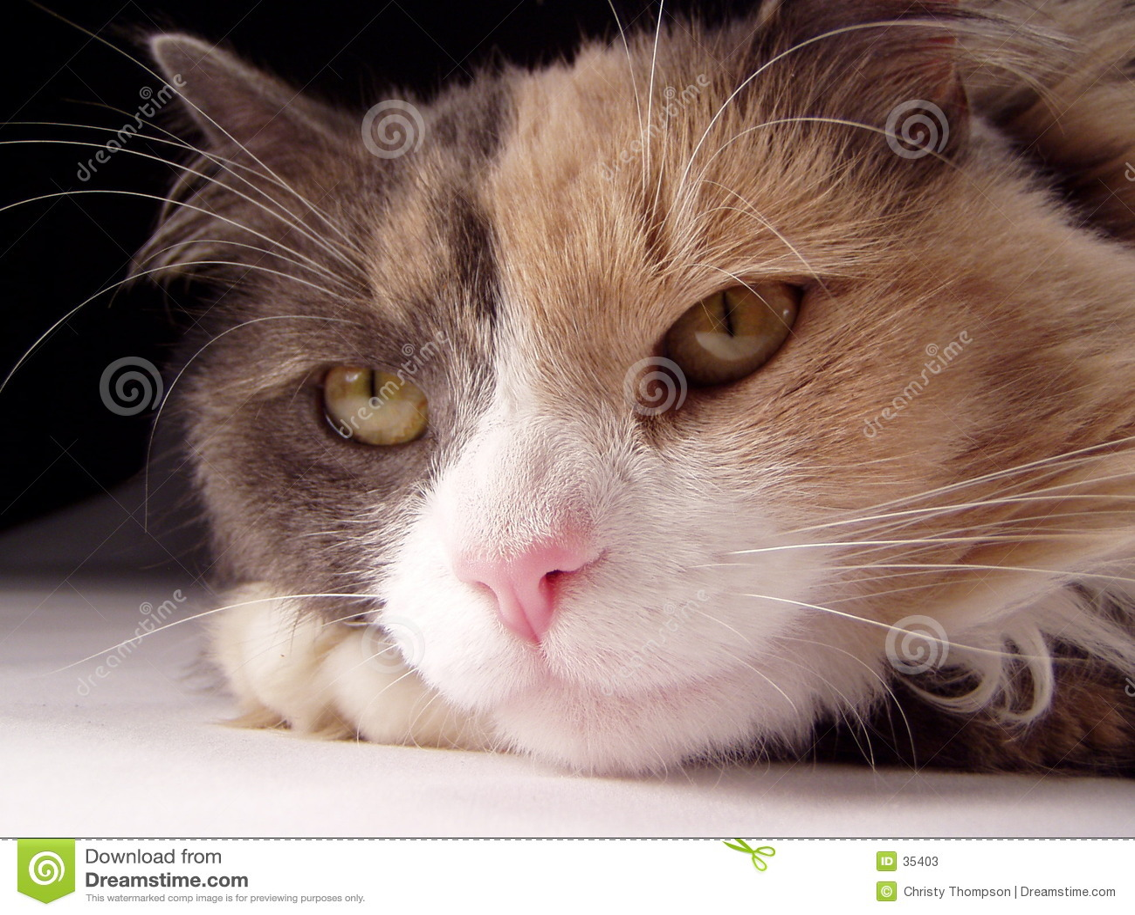 猫表面宏指令