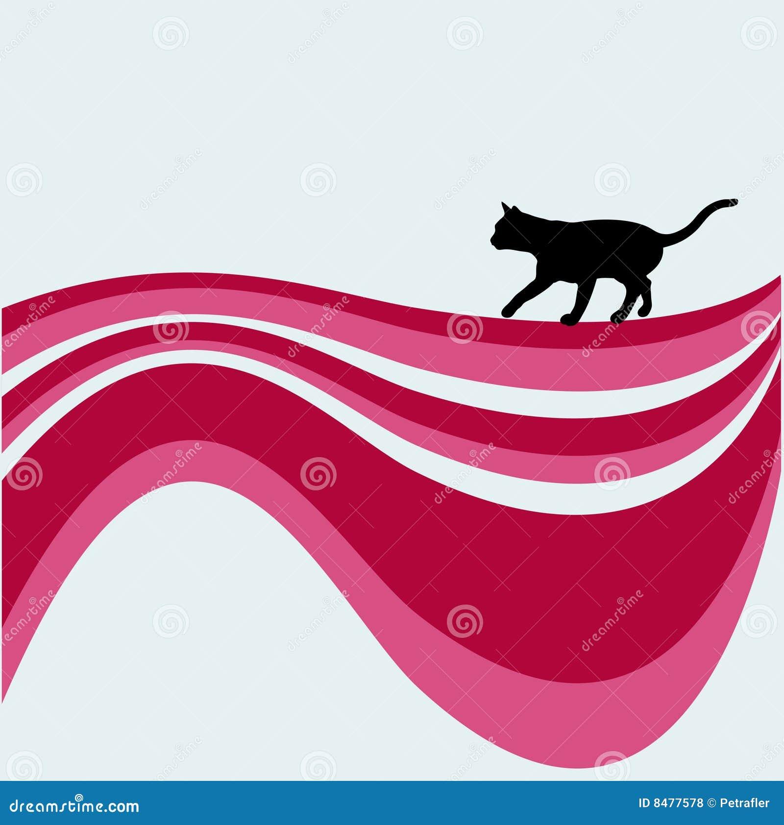猫迷路者漩涡