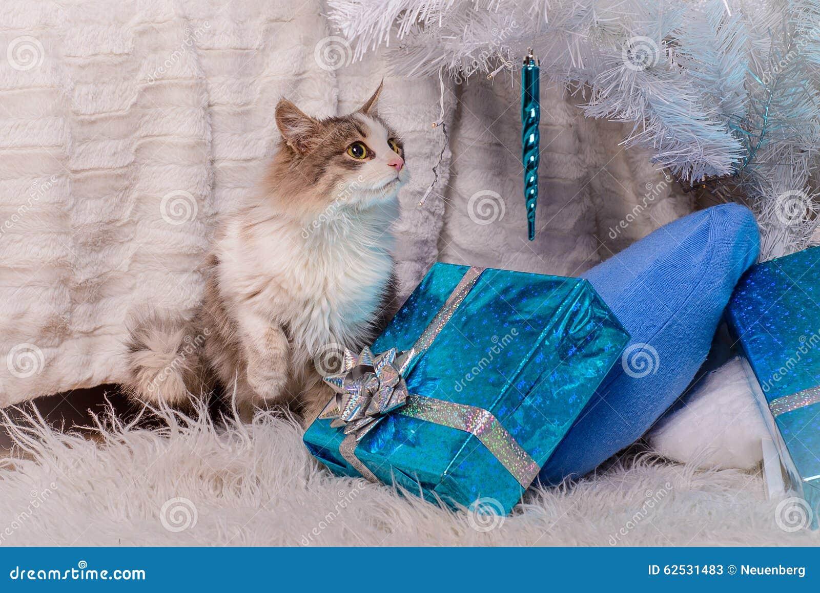 猫-一件礼物在圣诞树下