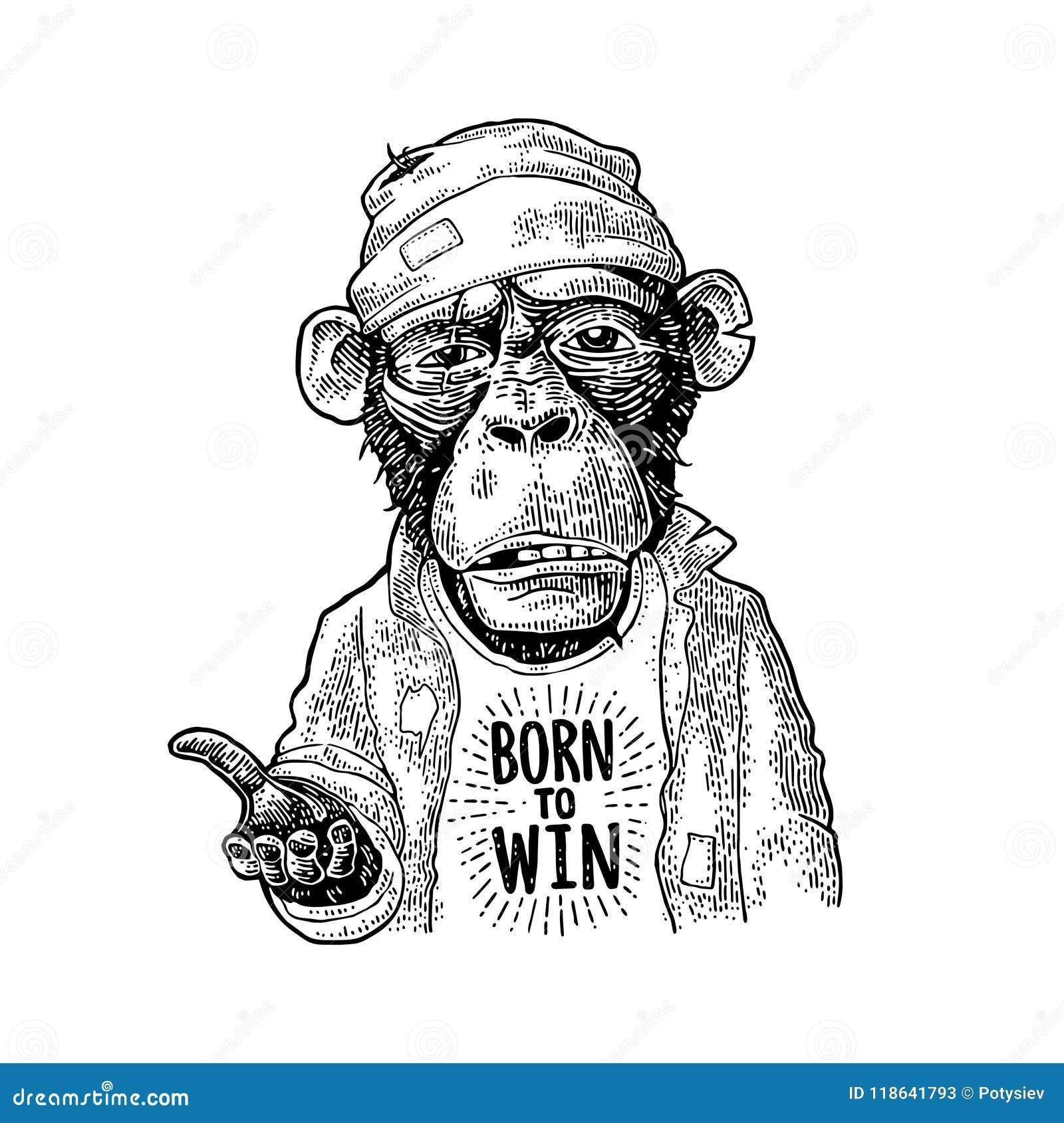 猴子乞求 在上写字出生赢取 葡萄酒黑板刻