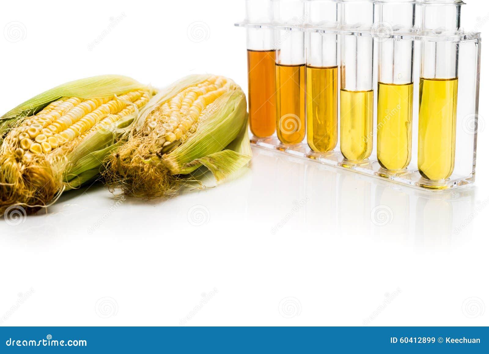 玉米在白色backgrou引起了与试管的对氨基苯甲酸二生物燃料