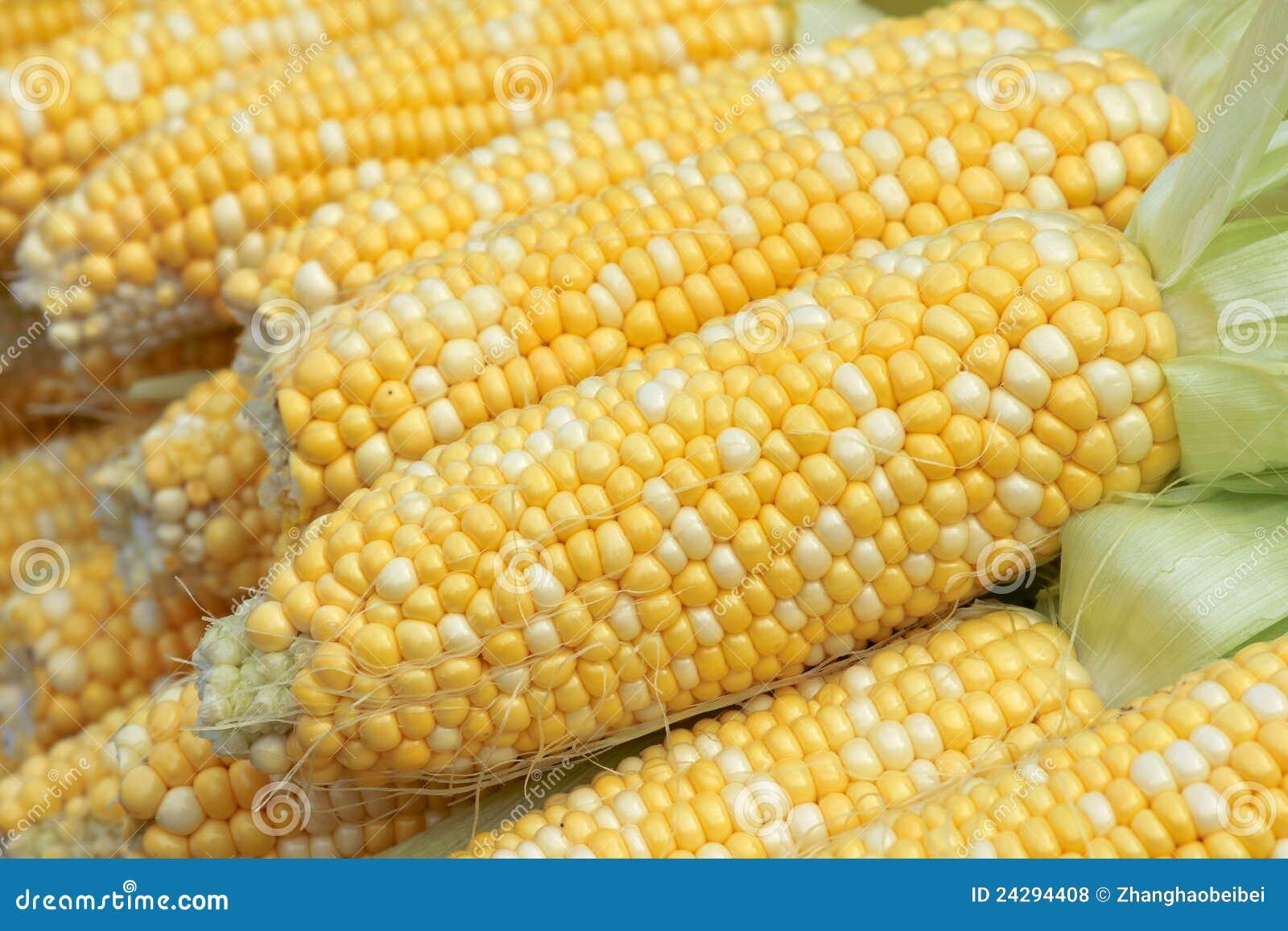 玉米棒玉米招标