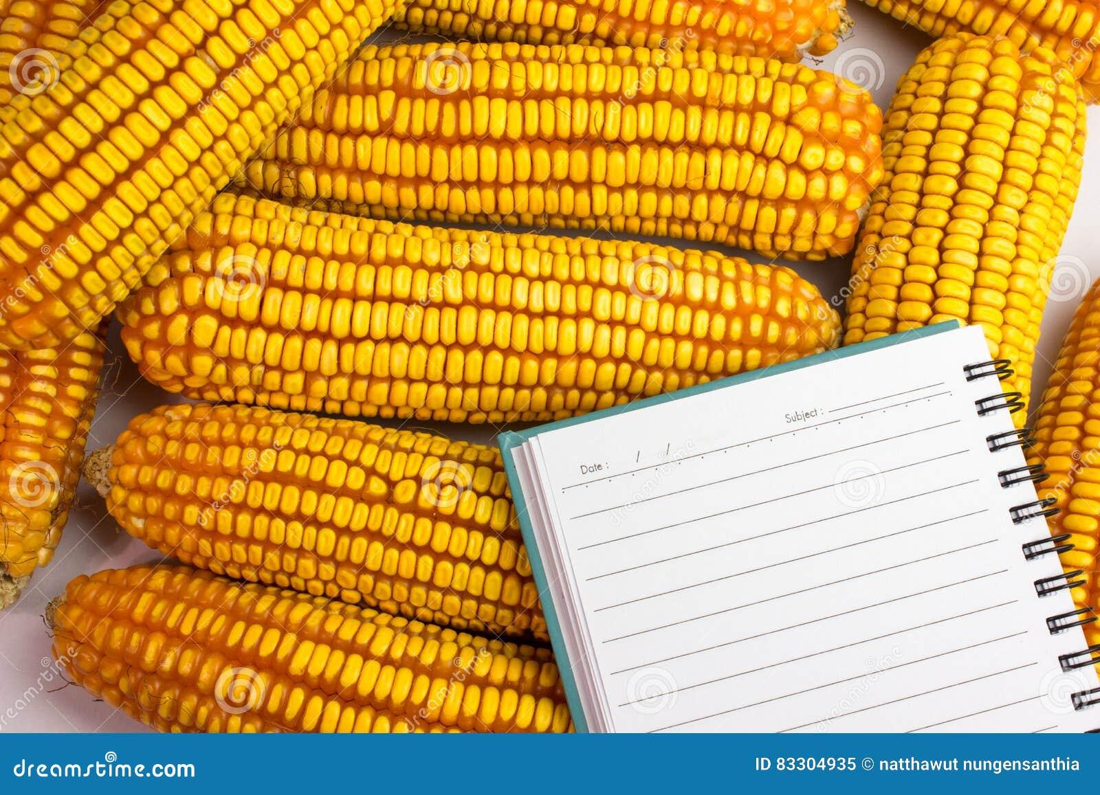 玉米沿着笔记本安置了