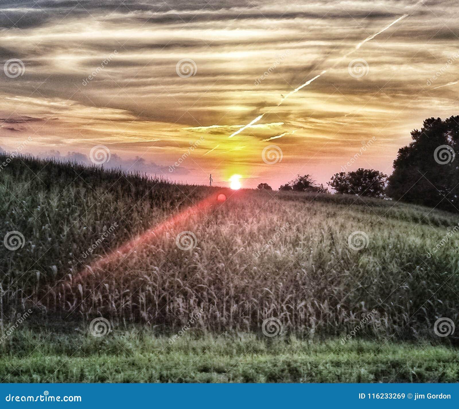 玉米田日落