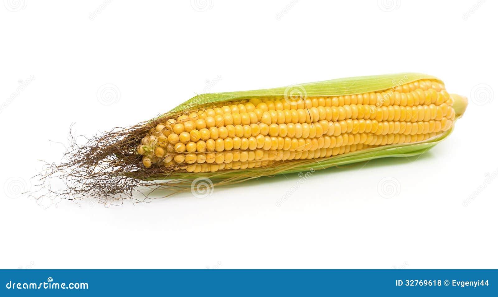 玉米穗在一个白色背景特写镜头的.水平的照片.图片