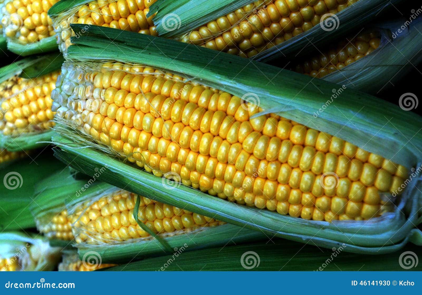 玉米穗图片