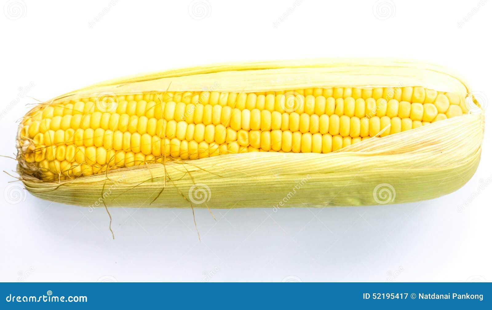 玉米穗在白色背景的.图片