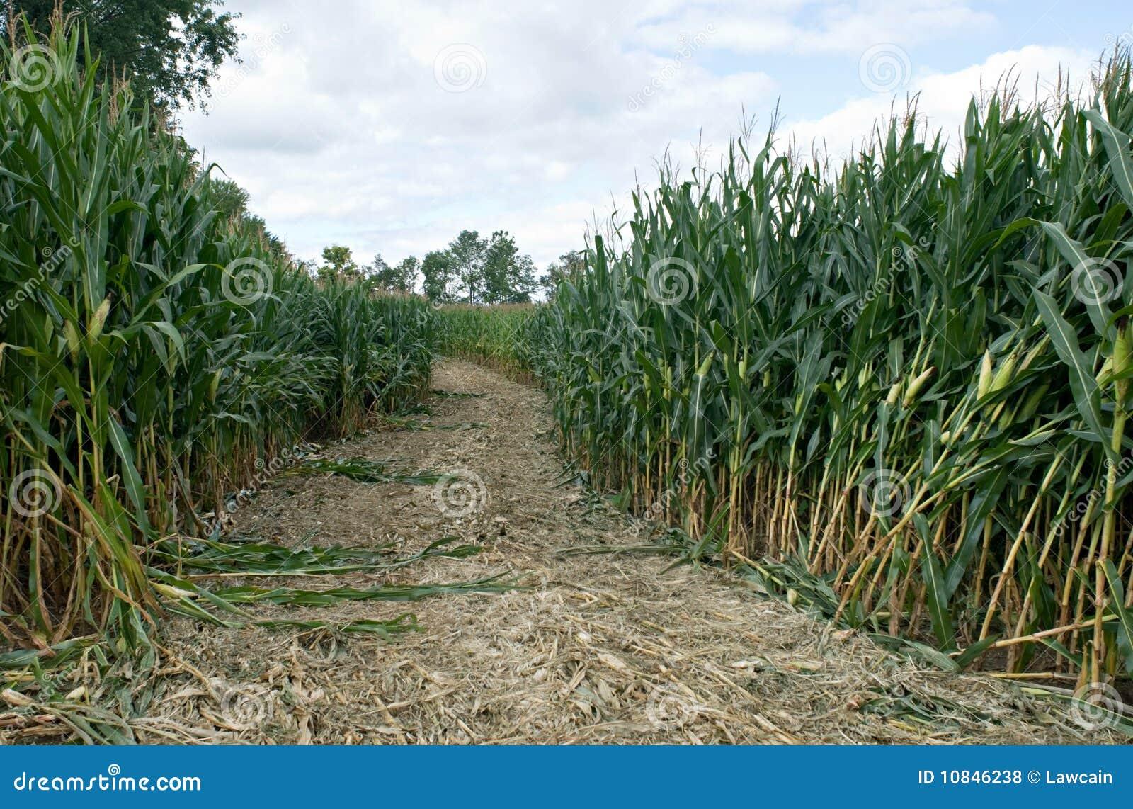 玉米迷宫路径