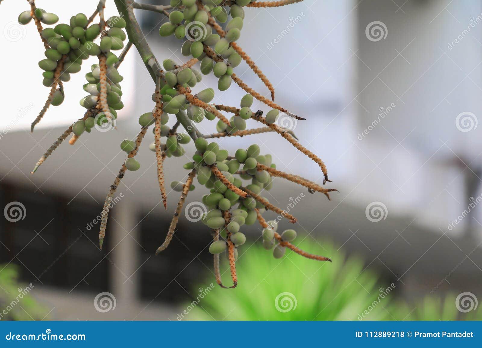 王侯唇膏棕榈封印,唇膏,王侯,大君园林植物在庭院里 选择与fie的浅深度的焦点