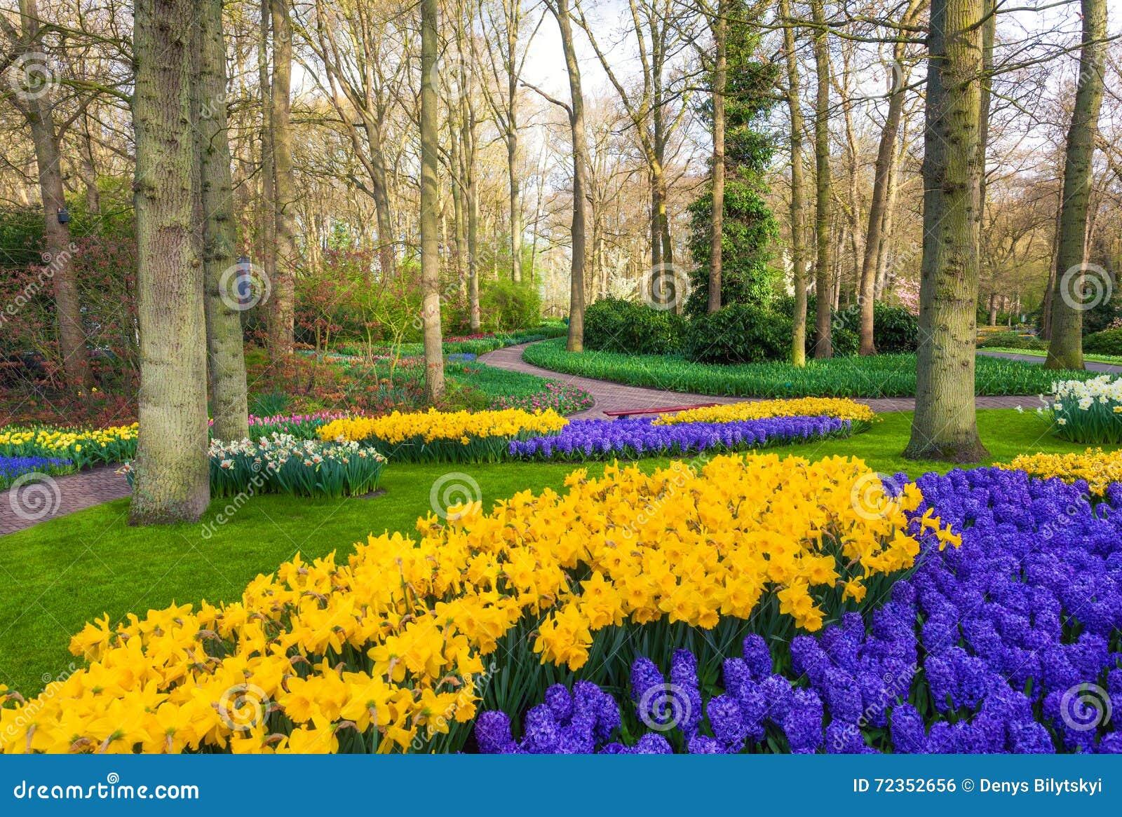 环境美化与美丽的开花的花在著名Keukenhof公园