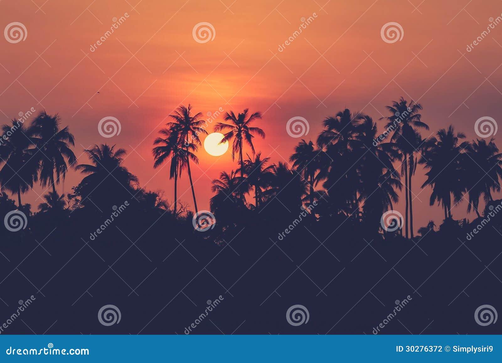 椰子果树园剪影照片黄昏的