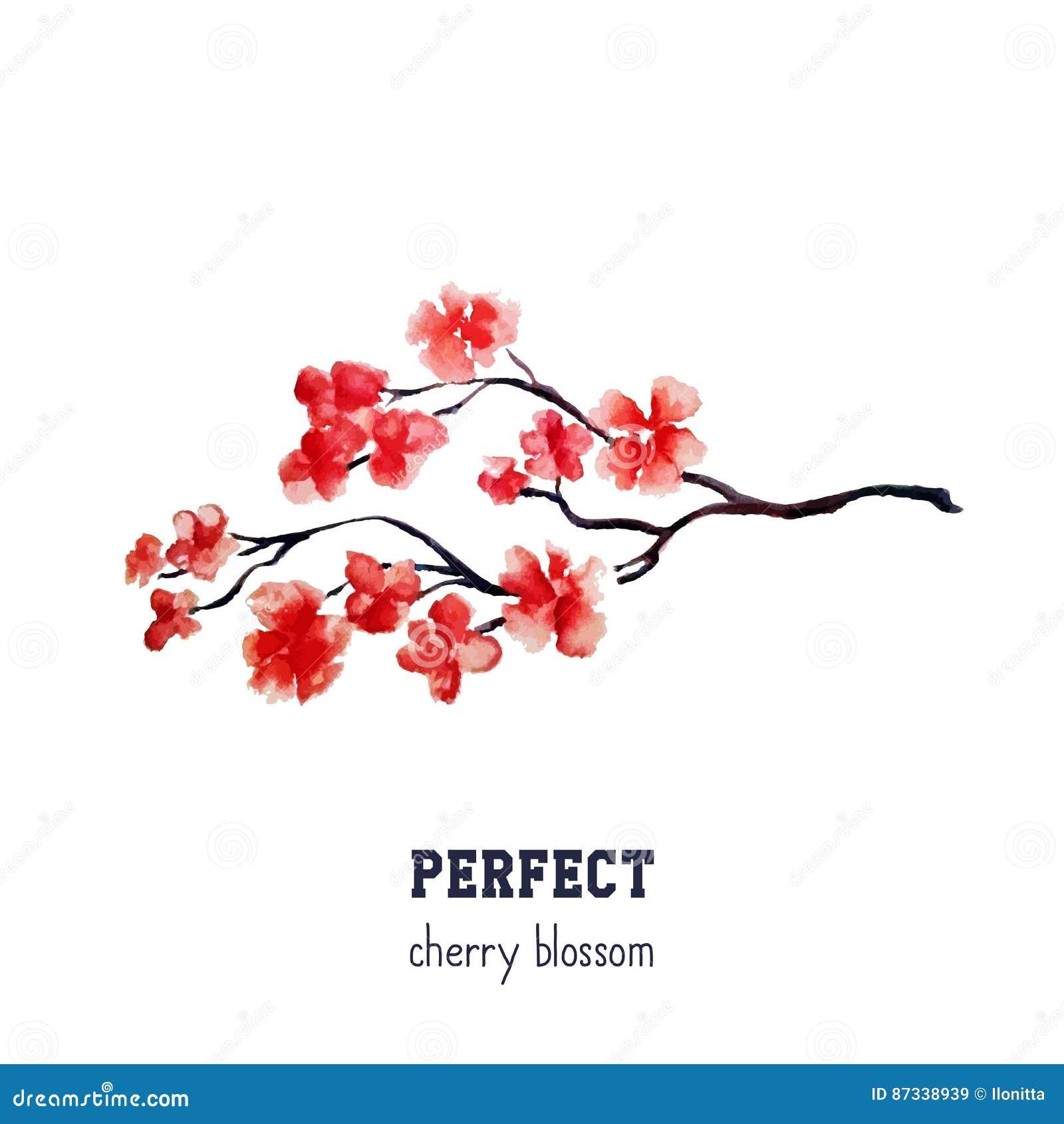 现实红色佐仓开花-在白色背景隔绝的日本红色樱桃树