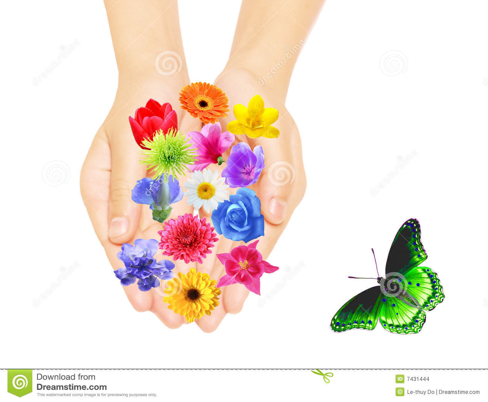 现有量和花