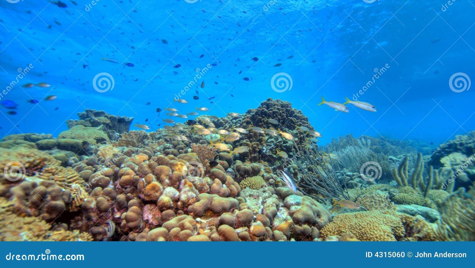 珊瑚全景礁石