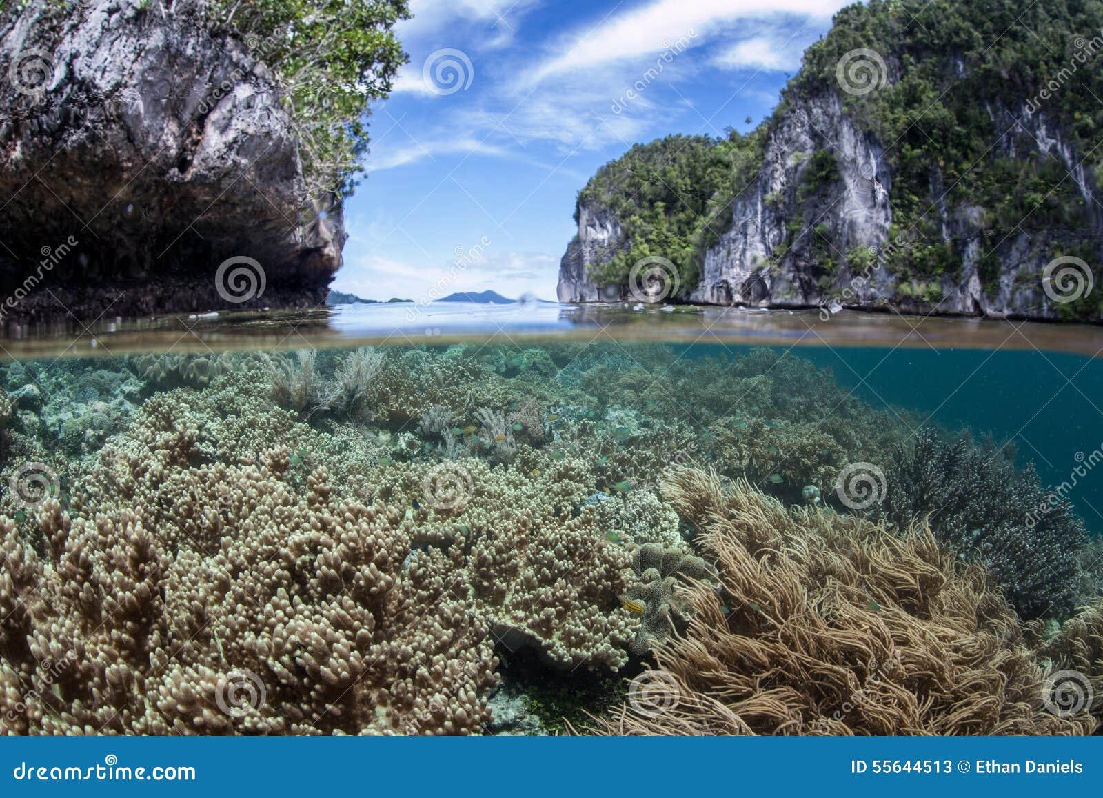 高海洋生物差异知道 它也是佩戴水肺的潜水和潜航的一个普遍的区域.
