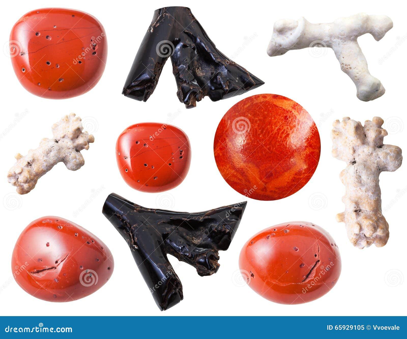珊瑚在白色隔绝的宝石和片断