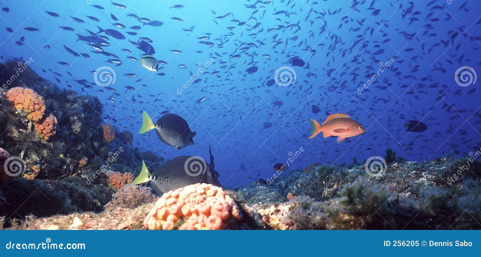 珊瑚墨西哥礁石