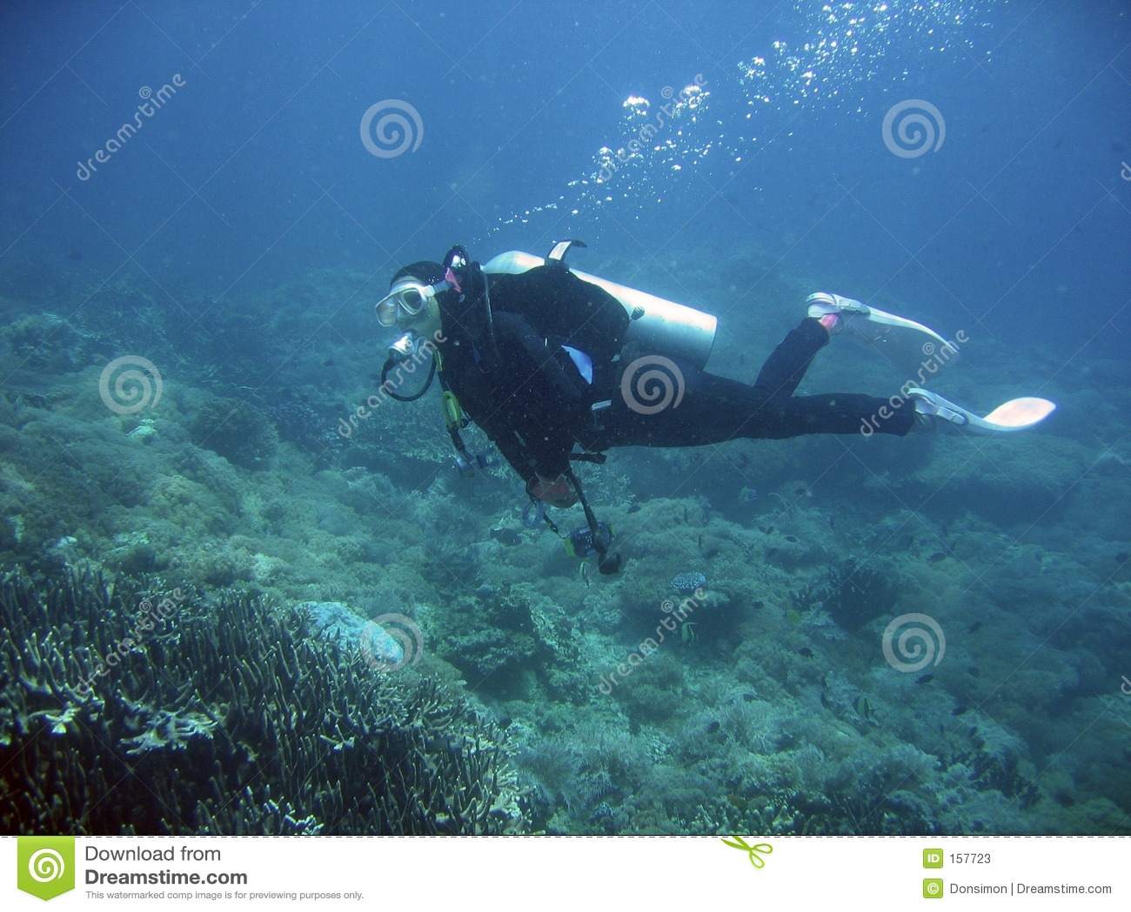 珊瑚潜水员测试礁石水肺