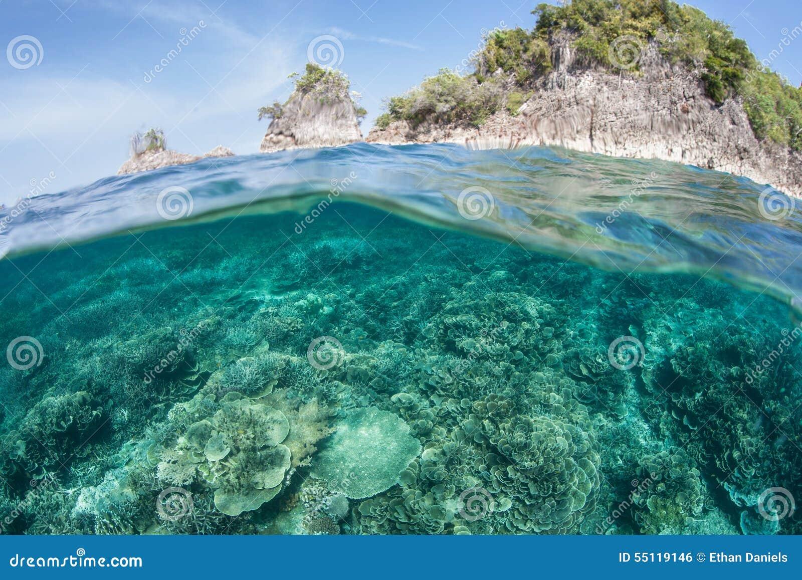石灰石海岛 这偏远地区是珊瑚三角的一部分和为它的高海洋生物差异