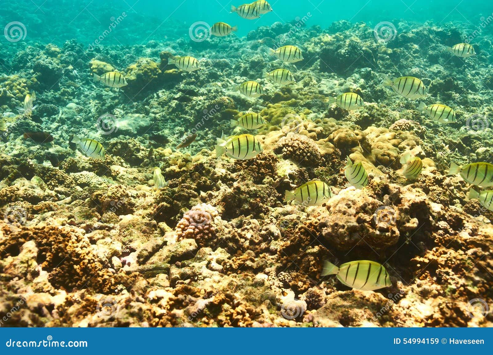 珊瑚礁和鱼