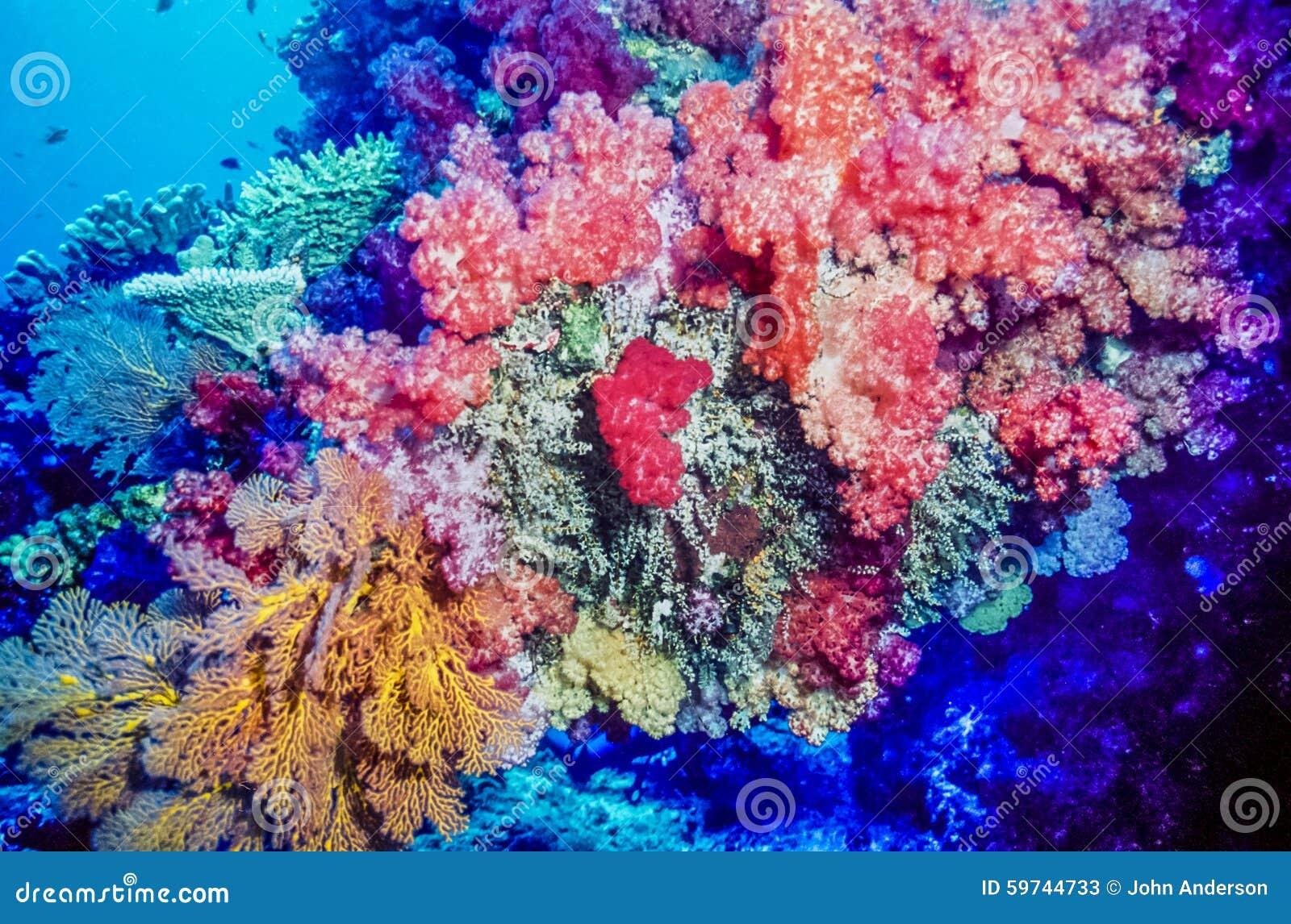 珊瑚礁斐济南太平洋