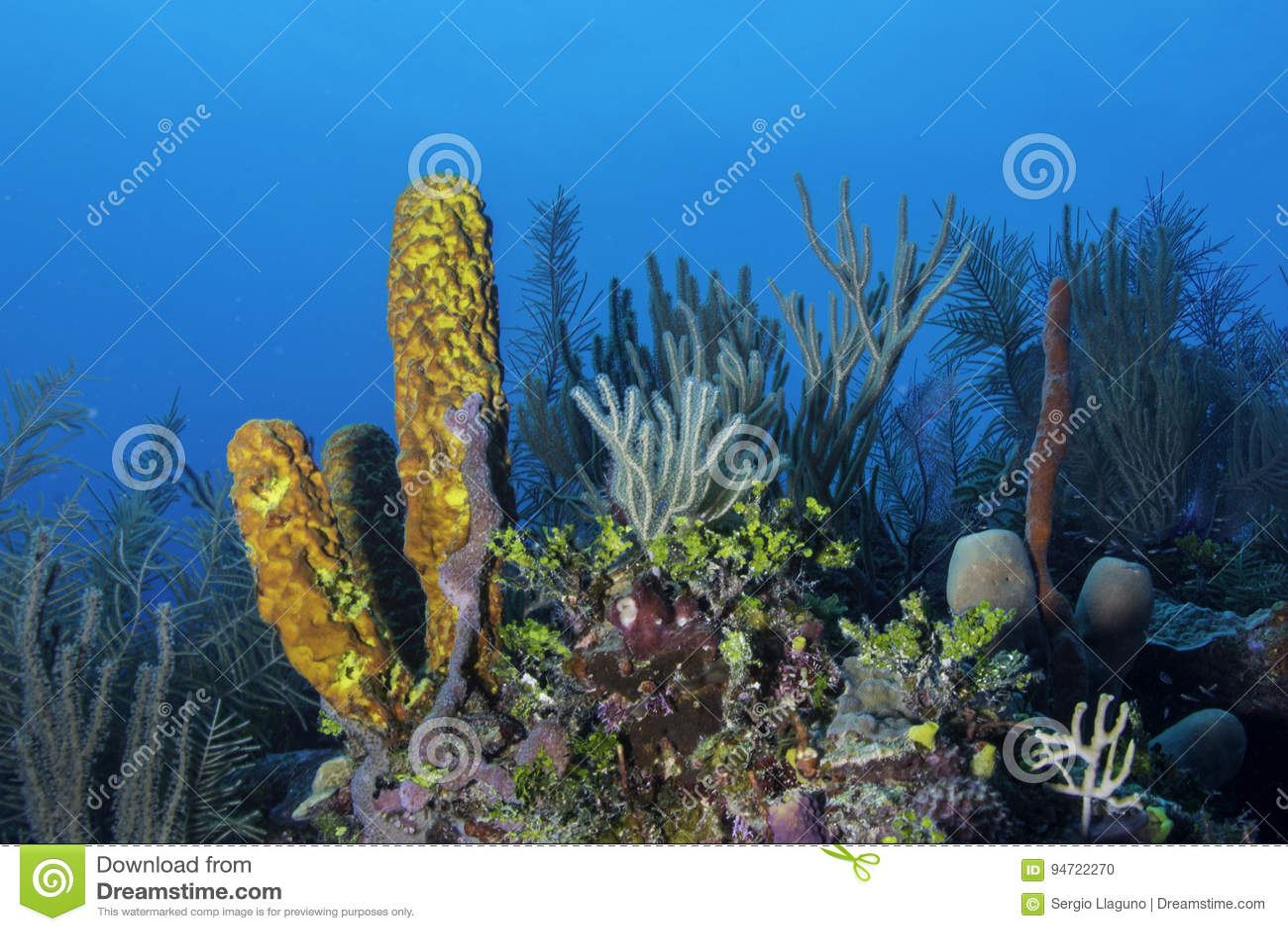 珊瑚礁黄色海绵