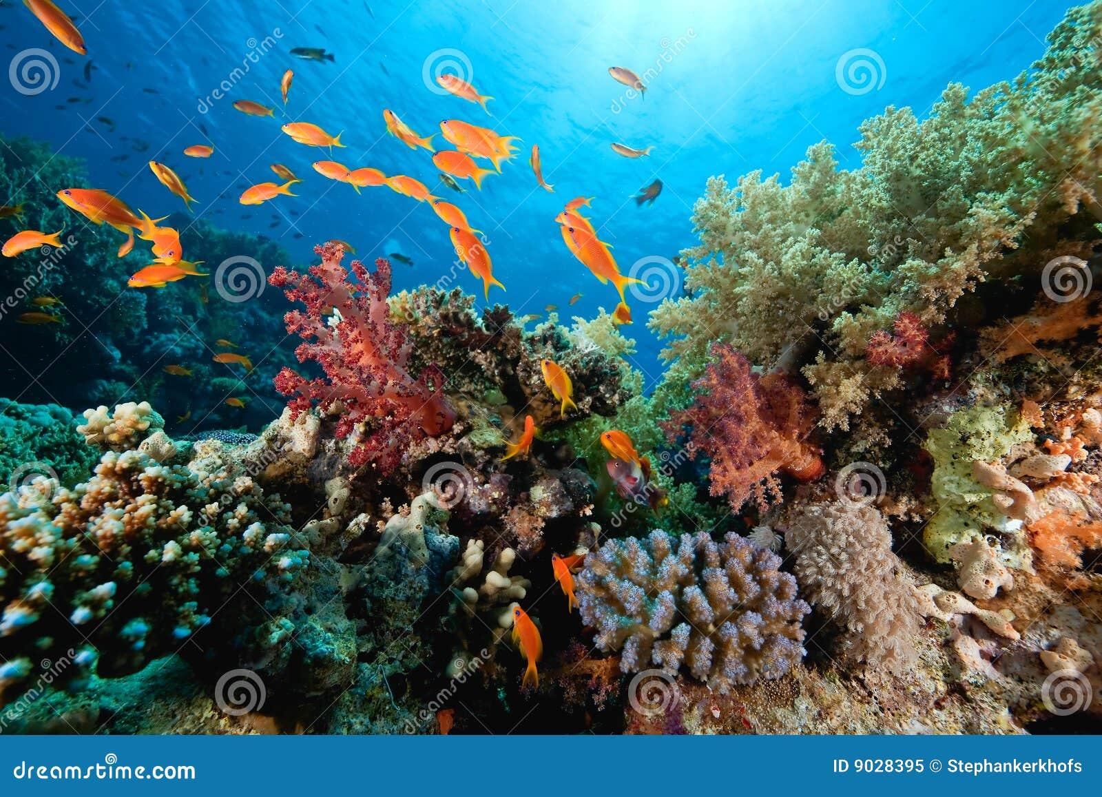 珊瑚鱼海洋