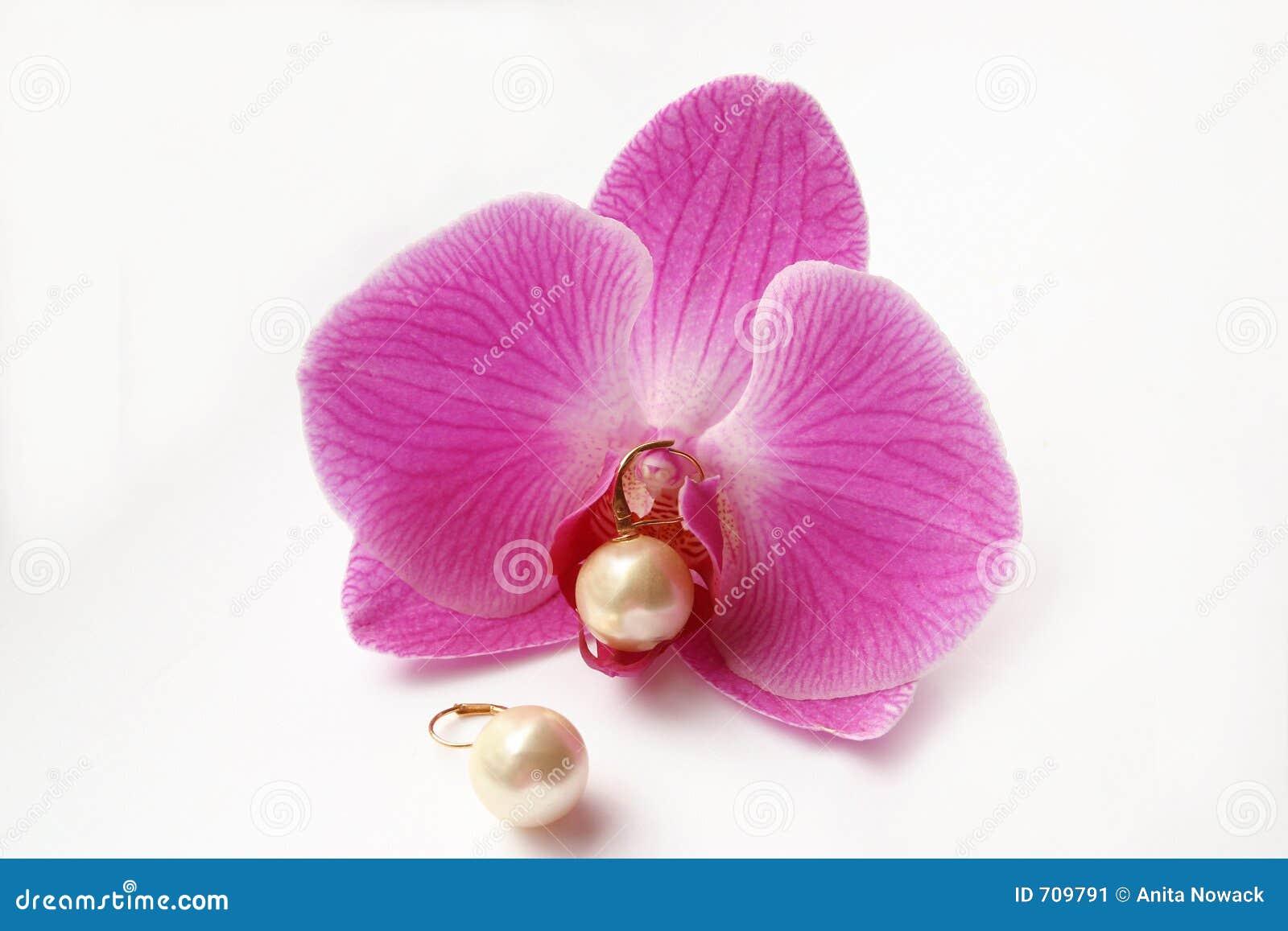 珠色的兰花