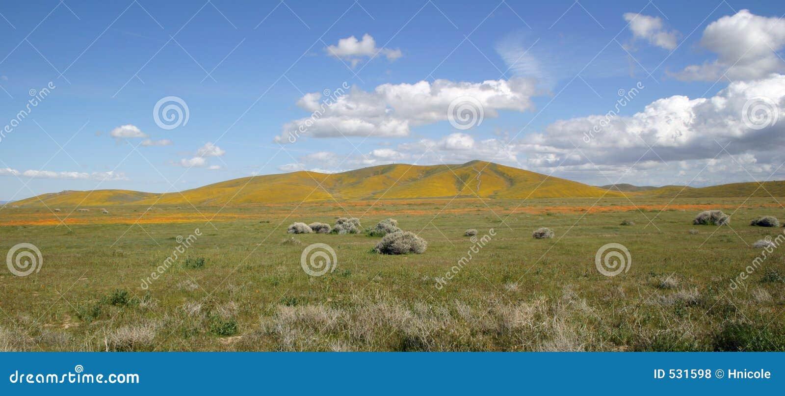 Download 理想的横向春天 库存照片. 图片 包括有 夏天, 黄色, 愉快, 天空, 横向, 加利福尼亚, 草甸, 鸦片 - 531598