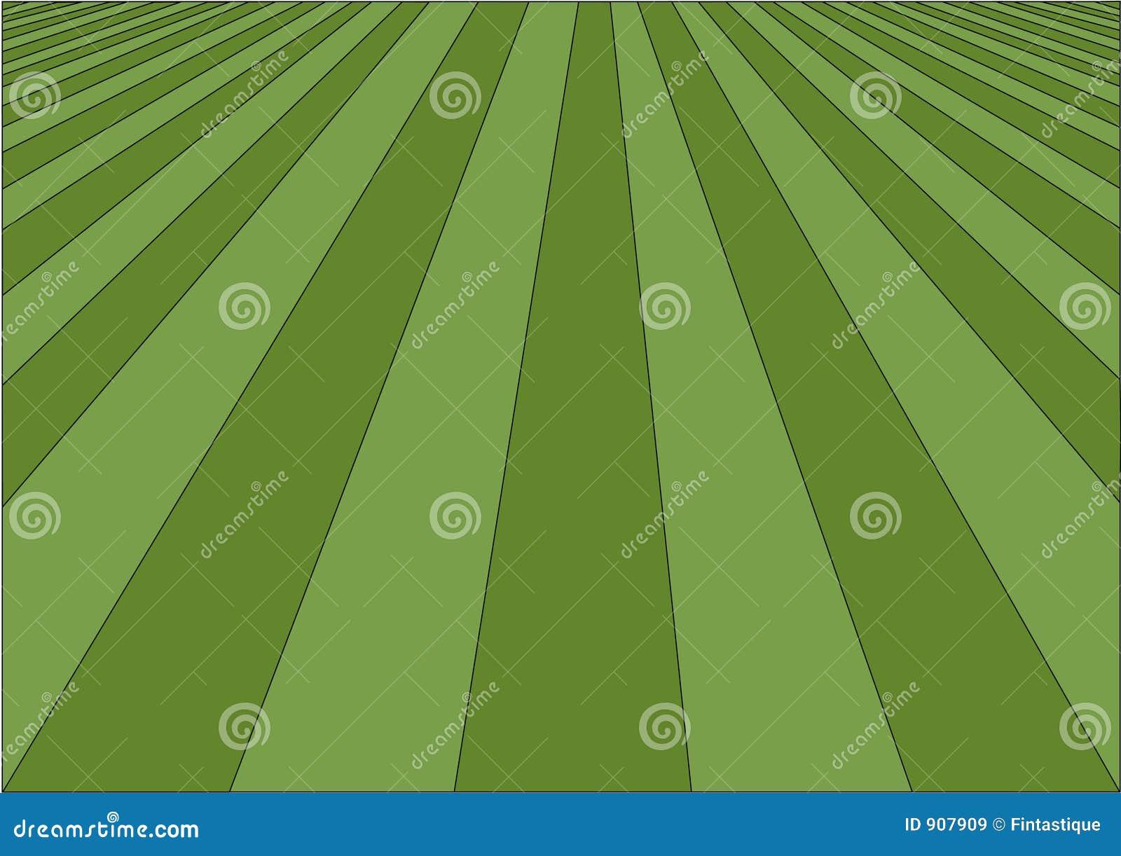 理想的草坪
