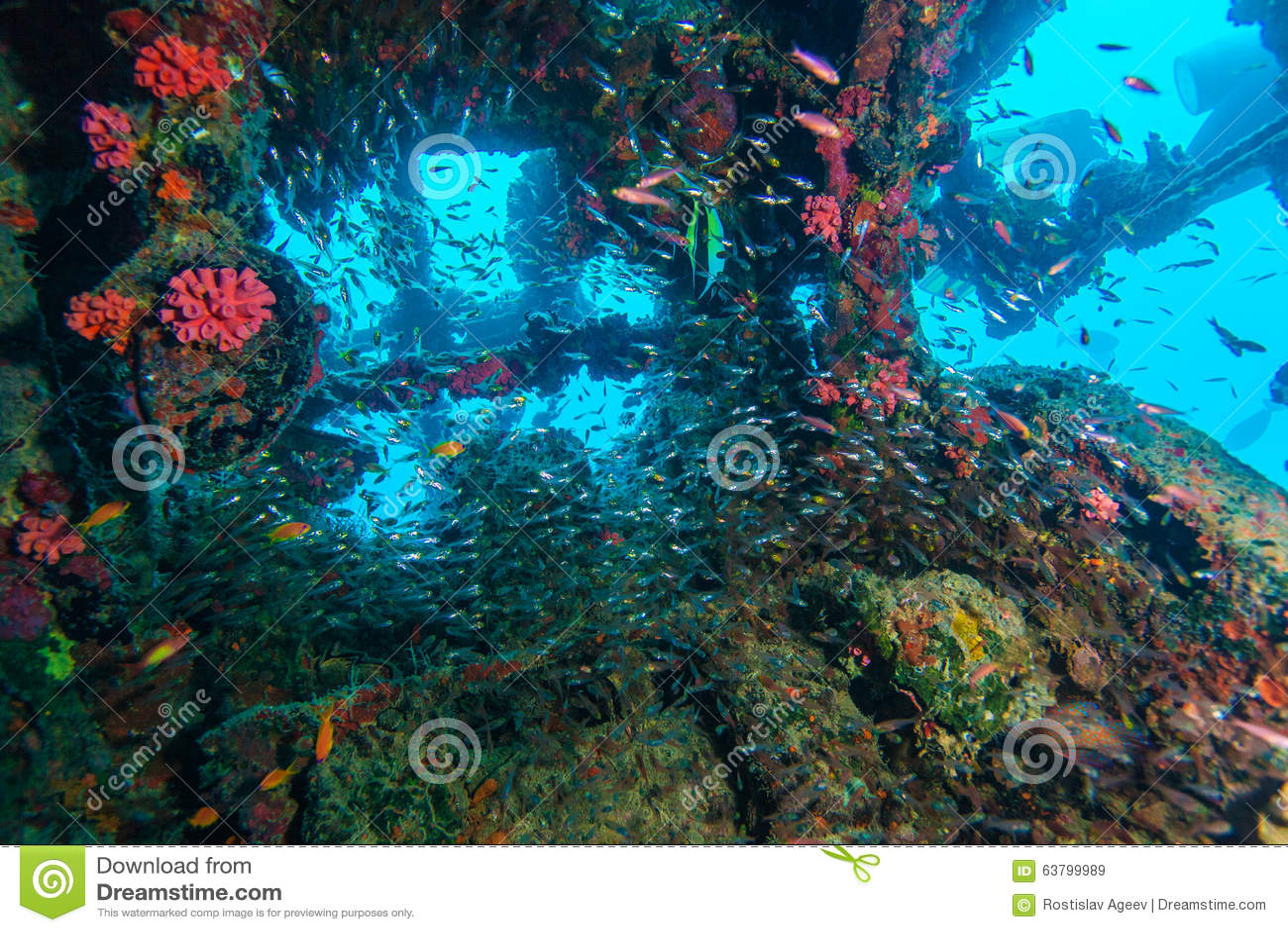 玻璃鱼学校在海难里面的