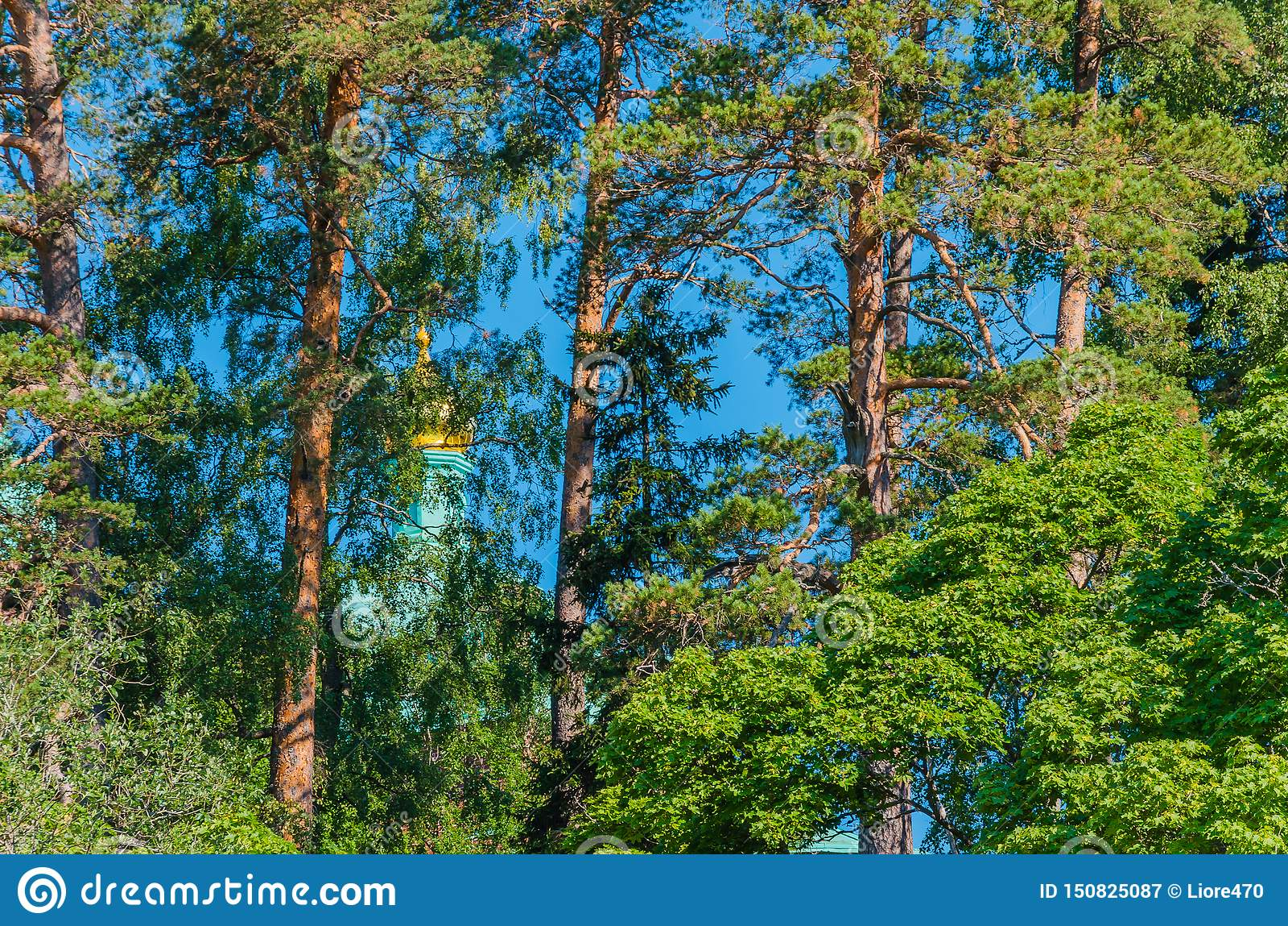 瓦拉姆群岛美丽的杉木,躲藏起来从寺庙爱管闲事者 根据传奇,瓦拉姆群岛是无法获得的对不轻信者