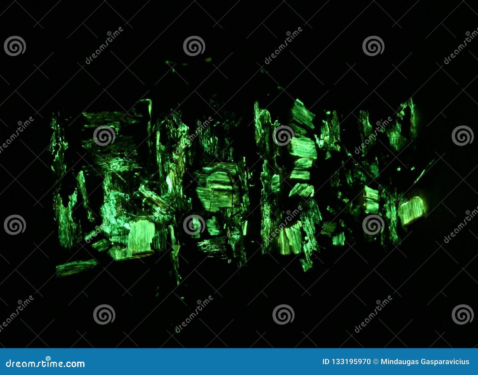 生物发光mycena绿色焕发