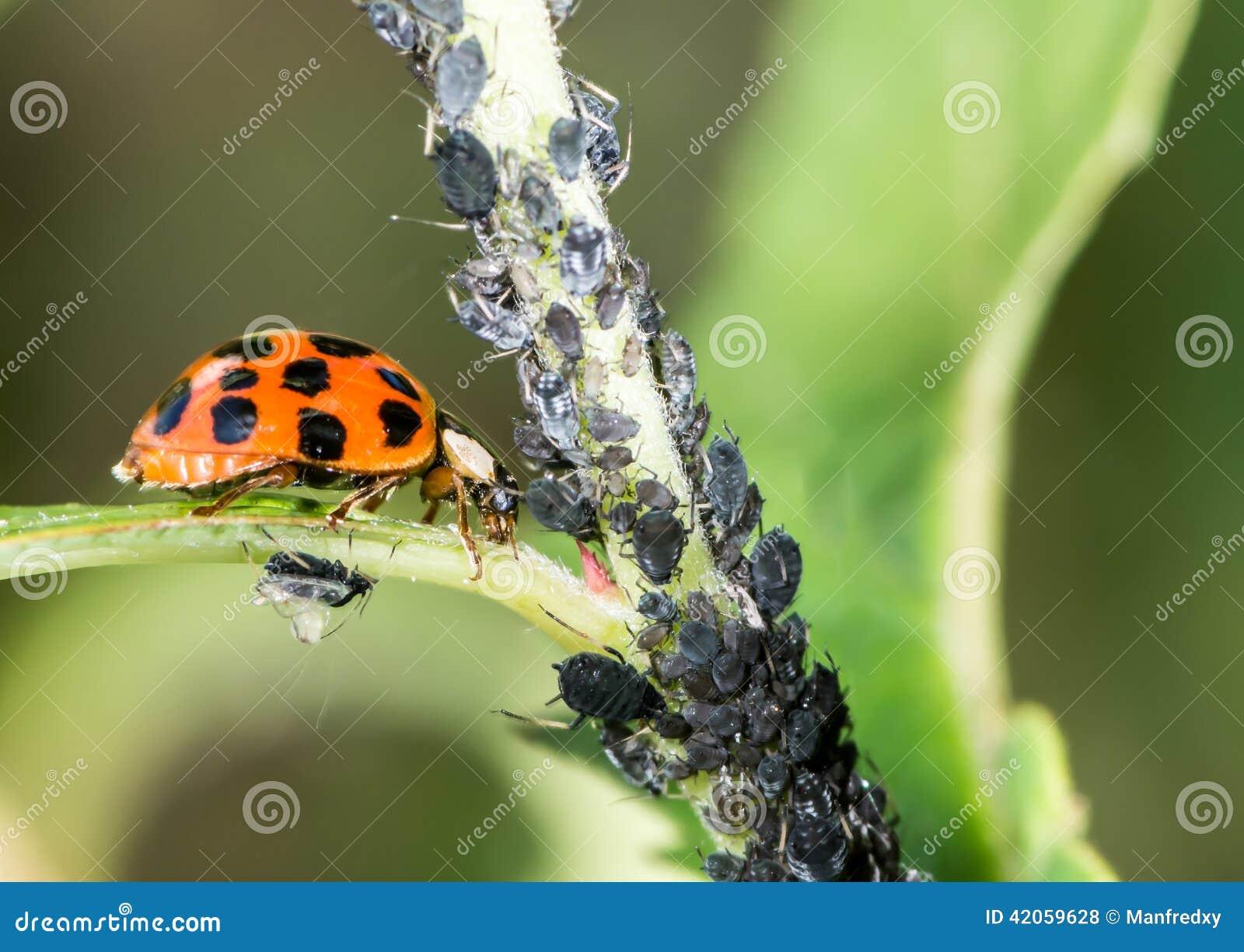 生物控制虫