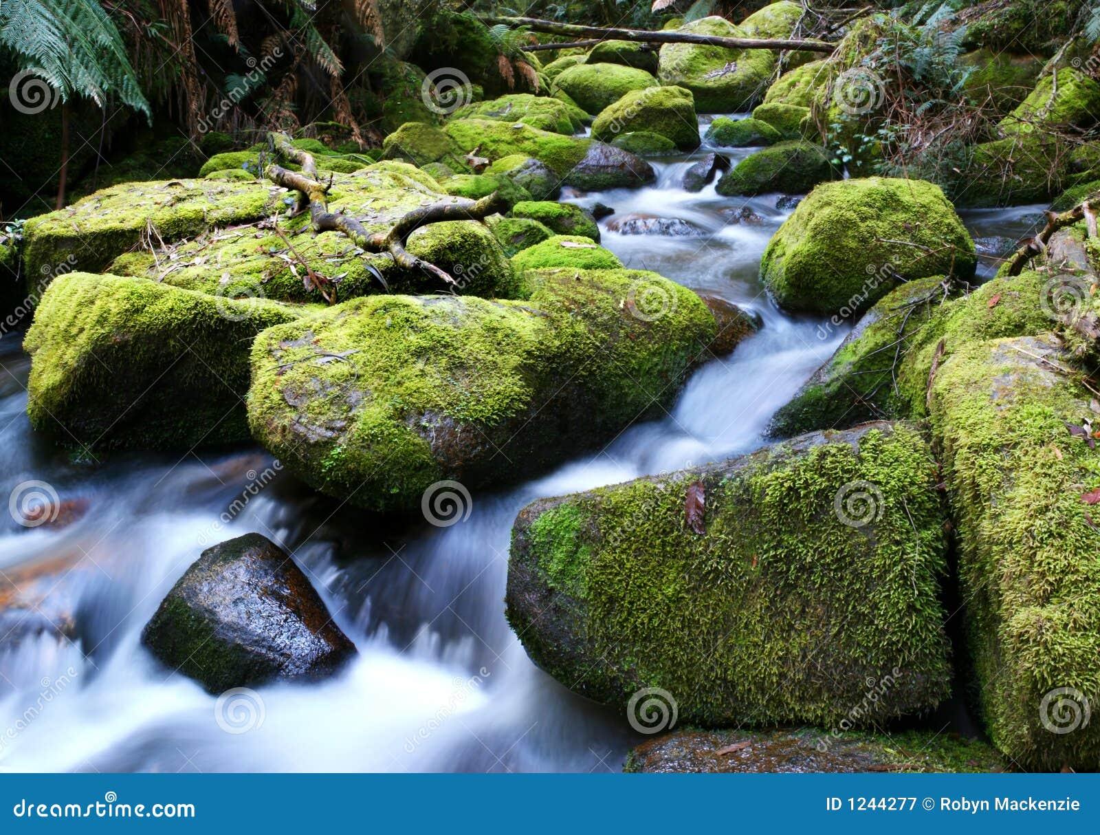 生苔在河岩石运行