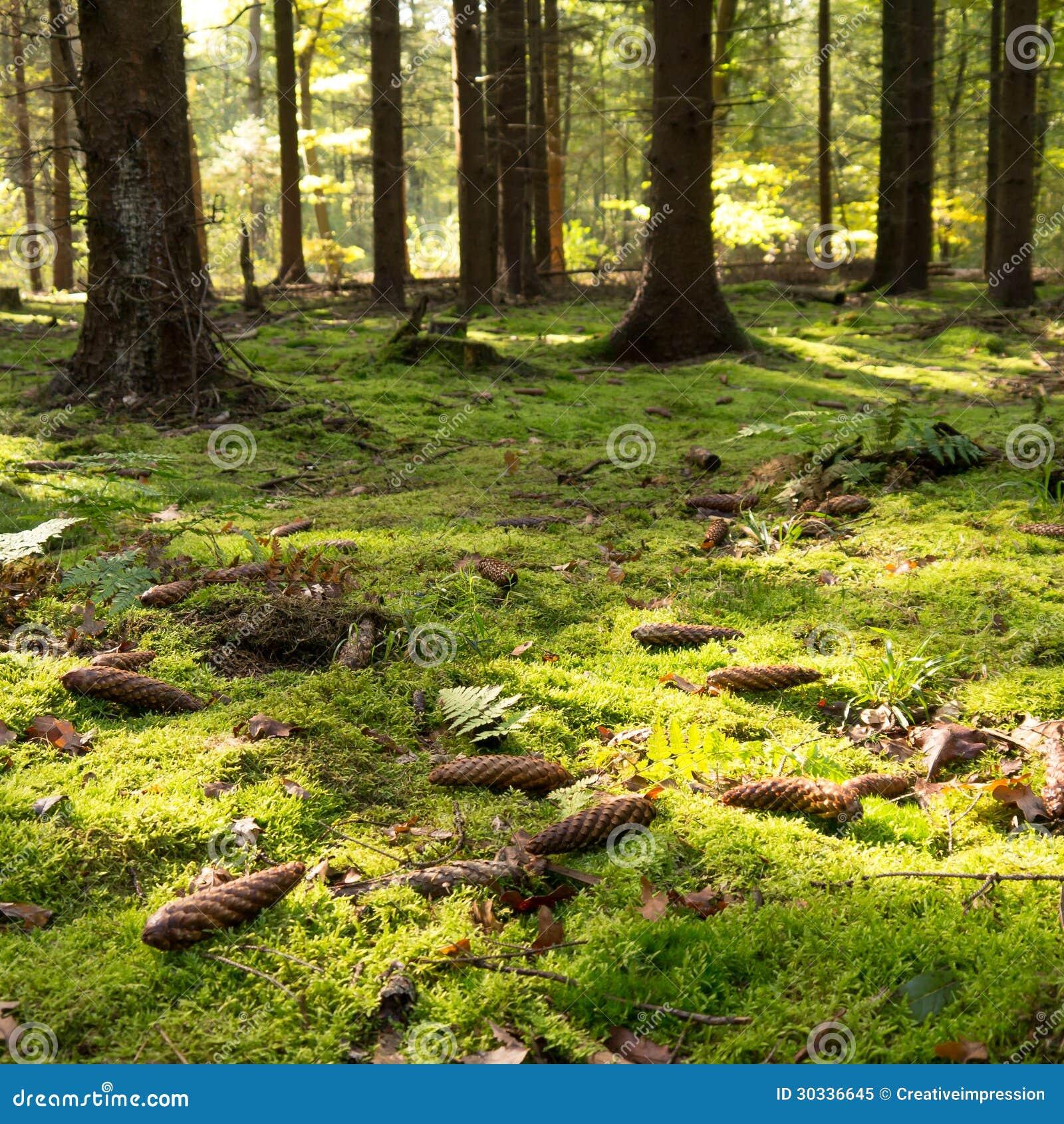 生苔森林地板