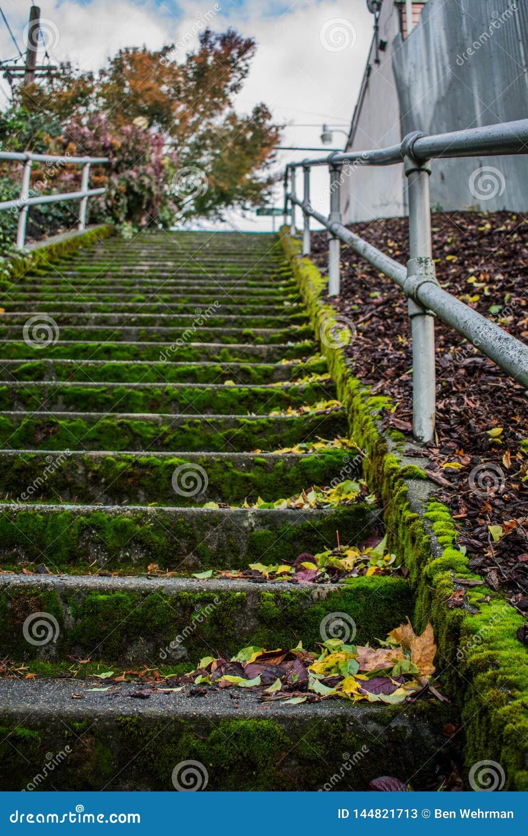 生苔楼梯在城市
