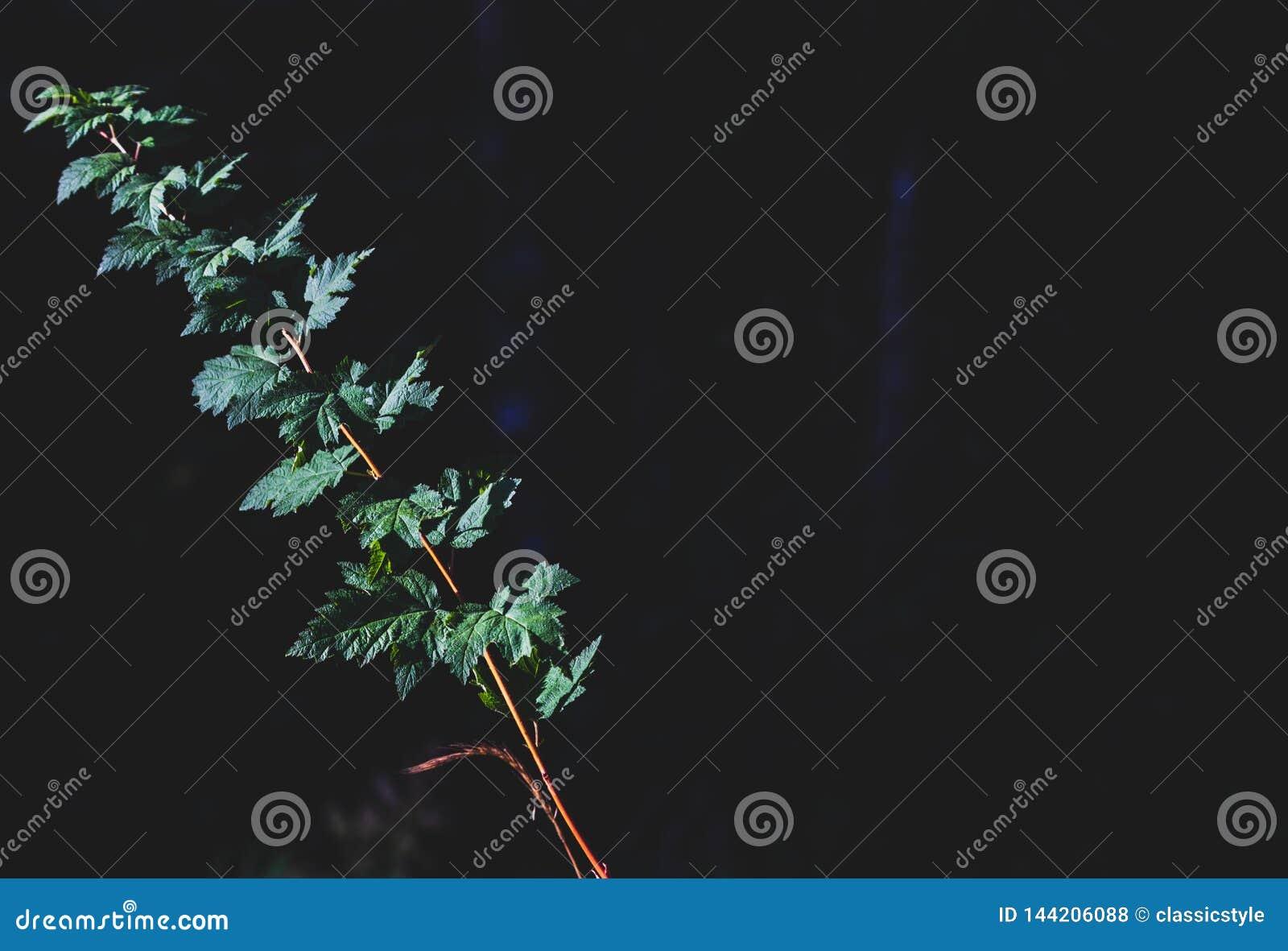 生长与文本的空间的绿色森林地板叶子
