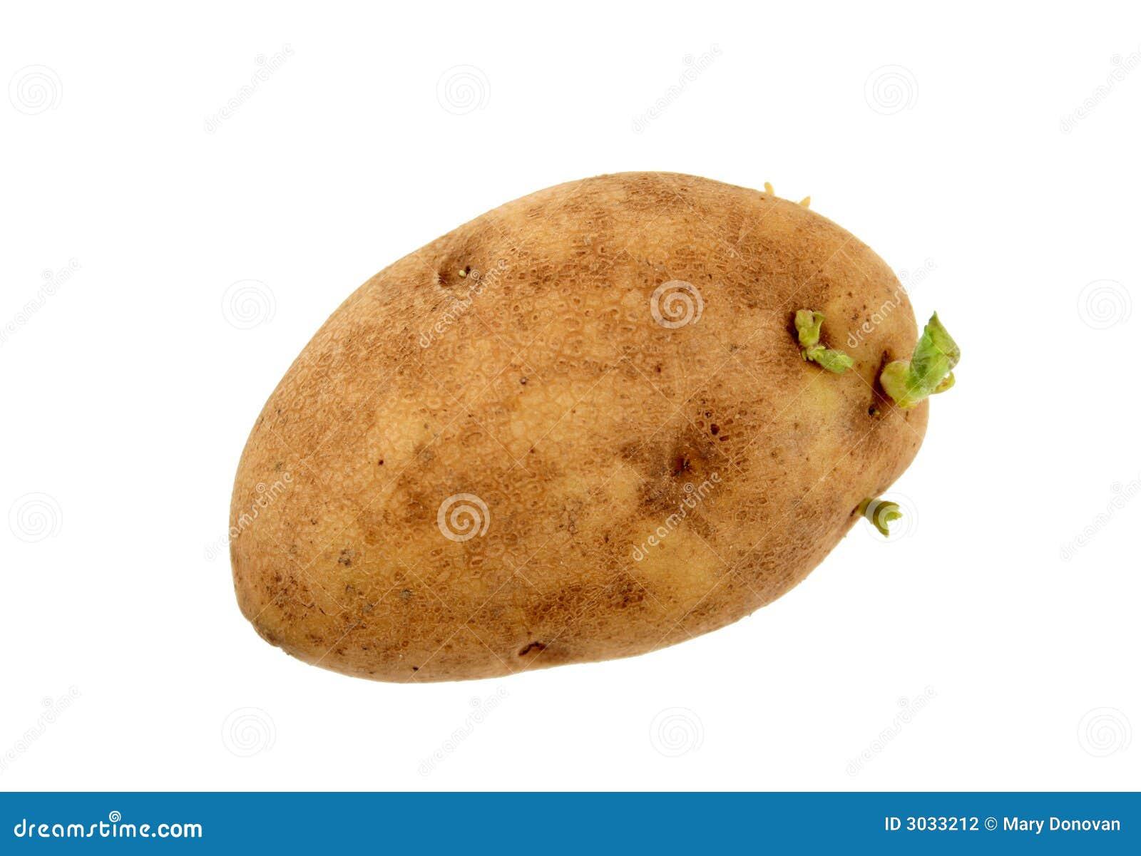 生长土豆新芽图片