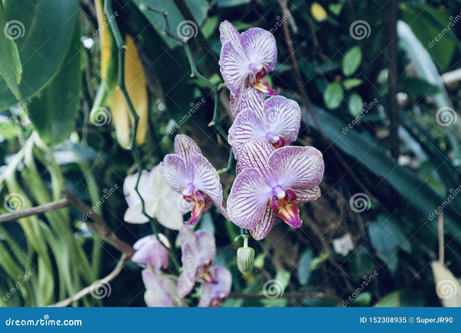 生长在一个植物园里的野生兰花